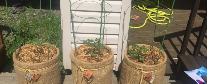 Grow Tomatoes in a 5 Gallon Bucket with style : An Easy DIY